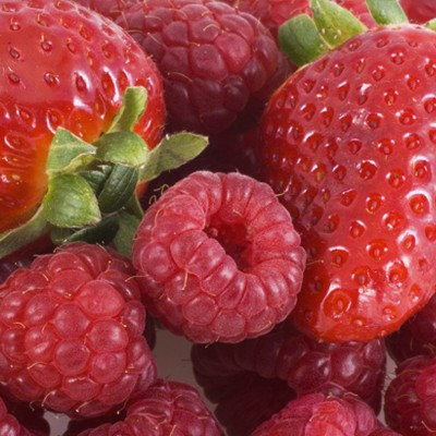 Latest Crop Report for Organic Raspberries and Strawberries